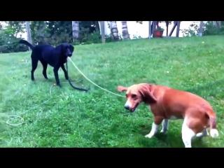 Лучшая подборка приколов с собаками, смешной пес,веселые животные, лучшие приколы