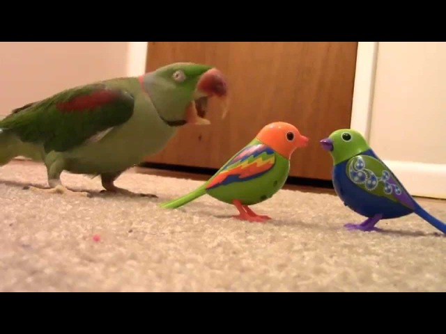 Real Bird's Reaction to Digibirds Part 2