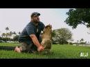 Jimmy's Return to Gator Rescues | Gator Boys