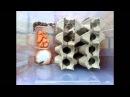 разведение мраморных тараканов/Nauphoeta cinerea