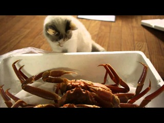 Cats intrigued by crabs