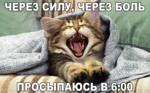 Доброе утро Друзья!