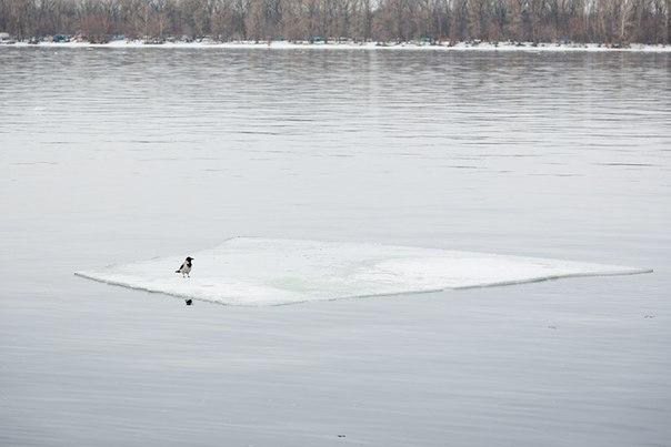 На Волге ледоход. Вороны путешествуют. Фото Дмитрия Леонова.