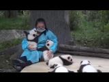 The worlds best job Wanna be a panda hugger - Funny Videos