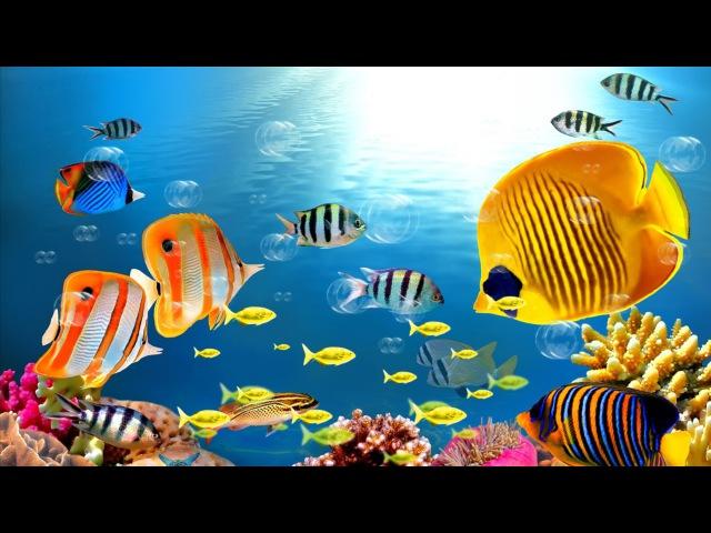 Золотая рыбка для друзей