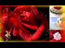 Солнышко все эти розы для тебя От всей души