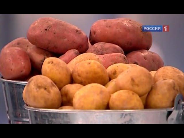 Картофель польза и вред Описание калорийность и характеристика картофеля