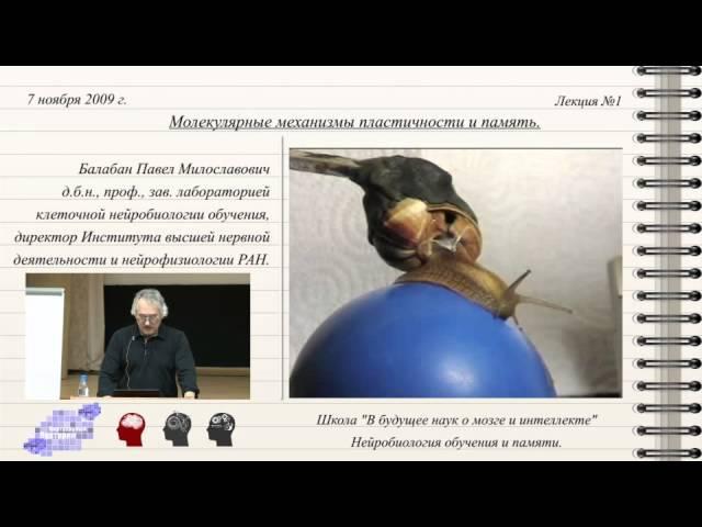 Павел Балабан Молекулярные механизмы пластичности и память