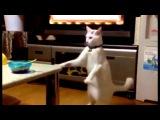 Кот наоборот приольный ржачный котик