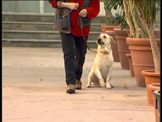 Команда Рядом - Дрессировка собак дома с нуля - как ходить на поводке?