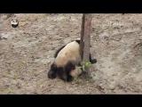 Ничего необычного,просто падающие панды