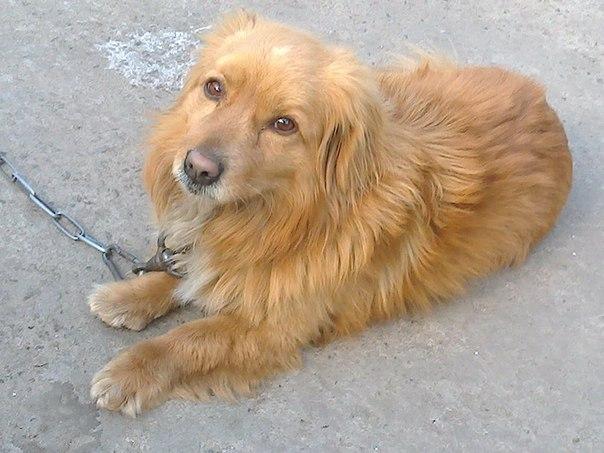 Пропала собака в Авдеевке.