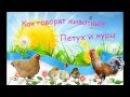 В Мире Животных - Как говорят животные - Петух, Куры с цыплятами ( живые звуки )