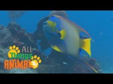 FISH Animals for children. Kids videos. Kindergarten Preschool learning