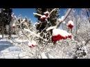 Daveed - December (wonderful guitar music)
