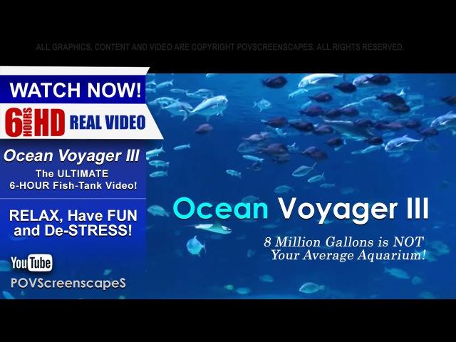 6 Hours Peaceful Relaxing Aquarium - Ocean Voyager 3 (Close-up view) Screensaver for DEEP SLEEP