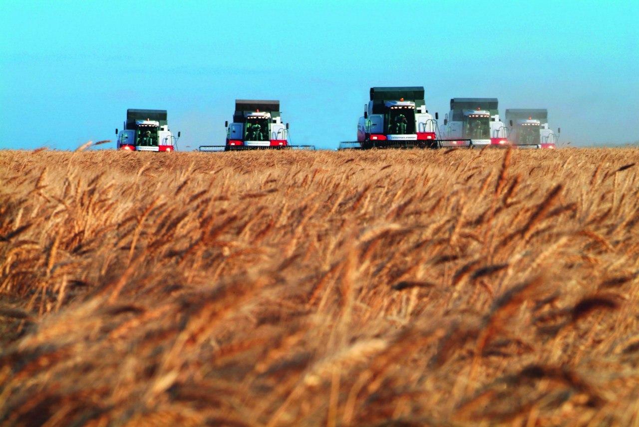 Валовой сбор зерна в Ростовской области достиг рекордных 9,8 млн тонн