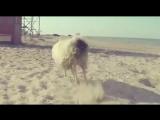 КВН Дагестан 2015 Клип о Дагестане Первый полуфинал (11.10.15)