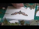 Art Timelapse - Cicada made with pressed fern - 2 in series of seven cicadas