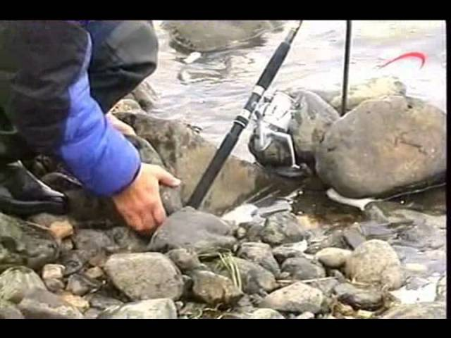 Налим (Мни, Мнёва) рыба царей Диалоги о рыбалке