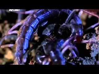 Войны жуков гигантов Сверх жестокость