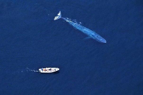 Самые интересные факты о китах 19 февраля отмечается Всемирный день китов, который также считается днем защиты всех морских млекопитающих. Праздник существует с 1986 года, когда Международная