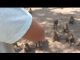 Милые тайские обезьянки