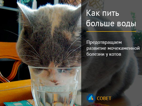 Чем лечить кота от мочекаменной болезни в