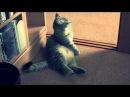Самый лучший кот попрошайка!