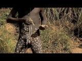 Дикая Африка. Племя Сурма. Обряд Украшения Тела