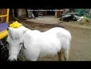 «я и лошадки » под музыку Dj DimixeR - Далеко, Далеко ускакала в поле молодая лошадь (radio edit) ★ Picrolla