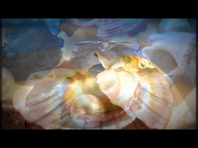 Лукашины Анна и Андрей: Жизнь дается Богом