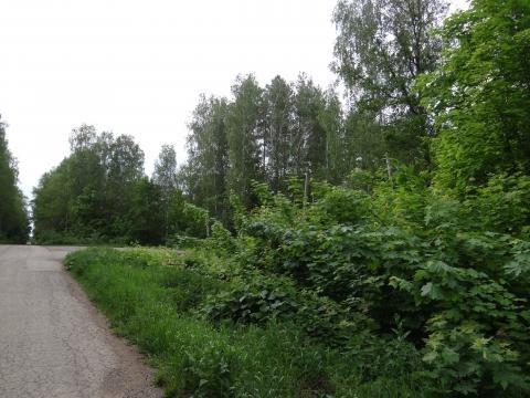 Житель Бавлов пожаловался в «Народный контроль» на разросшиеся деревья у обочины дороги