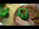 Libyan Stuffed peppers Filfil Mahshi فلفل محشي