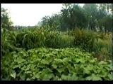 Целебные растения и их применение. Валерий Бабурин (часть 2)