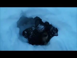 Мужик дал вторую жизнь щенкам, зарытым нелюдьми в сугроб
