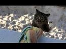 Когда это кот возвращается домой, все соседи падают со смеху)