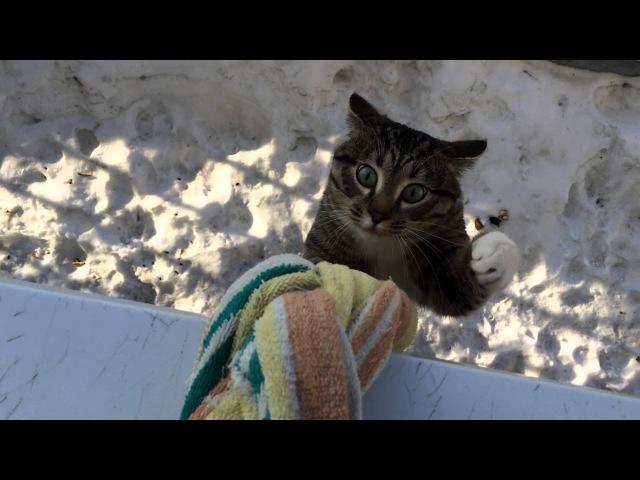Кoгда этот кот возвращается домой, все соседи падают со смеху))