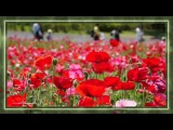 гр Весна - Научи  меня.....