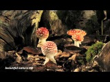 Как растут грибы slow motion замедленная съемка