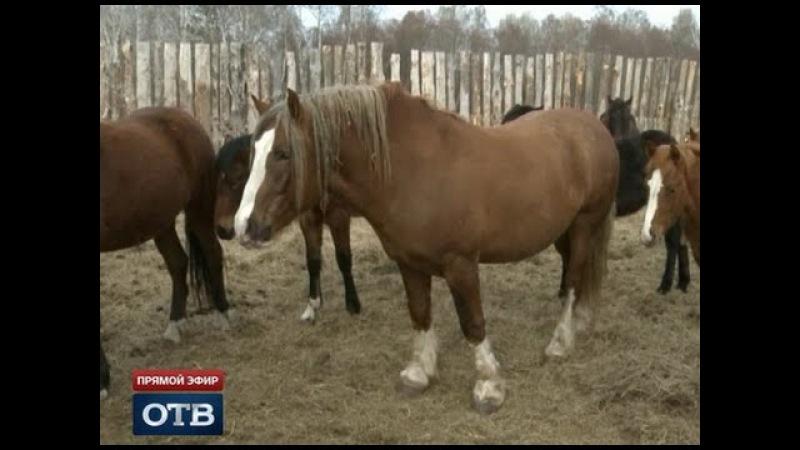 Свердловские фермеры запустили производство деликатесов из конины