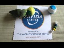 Pickles the Parrotlet Loves Zavida Coffee! [Funny]