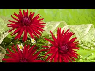 ОСЕННИЕ ЦВЕТЫ под музыку Ион Суручано - дарите женщинам цветы. Picrolla