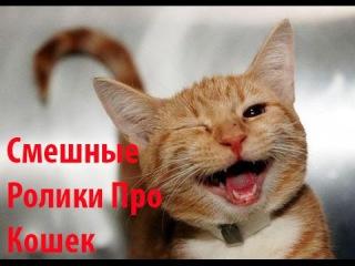 смешные ролики про кошек!подборка смешных роликов про кошек
