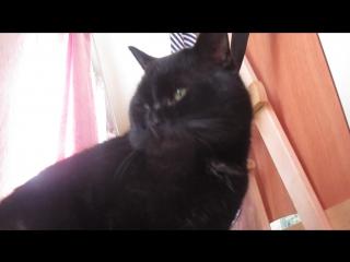 Мяв. Киска. Мяукает. Котик. Кошки. Кот. Хэштэги. Без. Хэштегов.