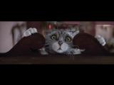 Ролик з різдвяним котом підірвав мережу. Більше 3 млн. переглядів!!!