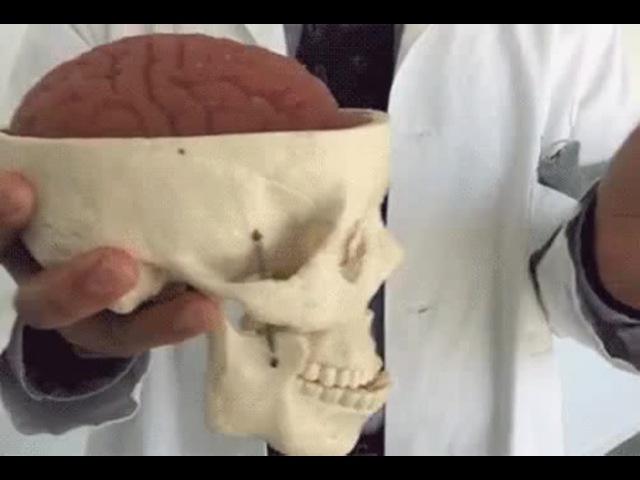 Мізки в ударі