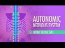 Kids' English Autonomic Nervous System Crash Course A P 13