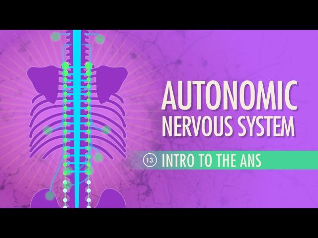 Autonomic Nervous System: Crash Course AP 13