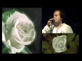 ТиК-Белые розы